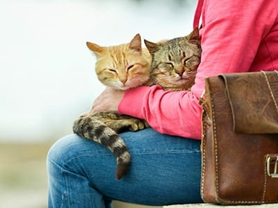 Two cats sitting on a lap: Pet Grooming in Miami