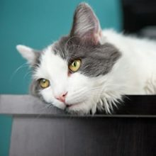 How Do You Know if Your Cat Has Ringworm in Miami, FL?